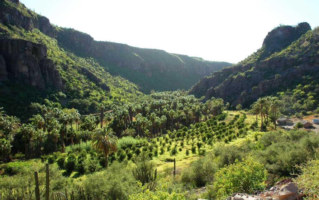 Área de estudio: oasis de Comondú (BCS, México)